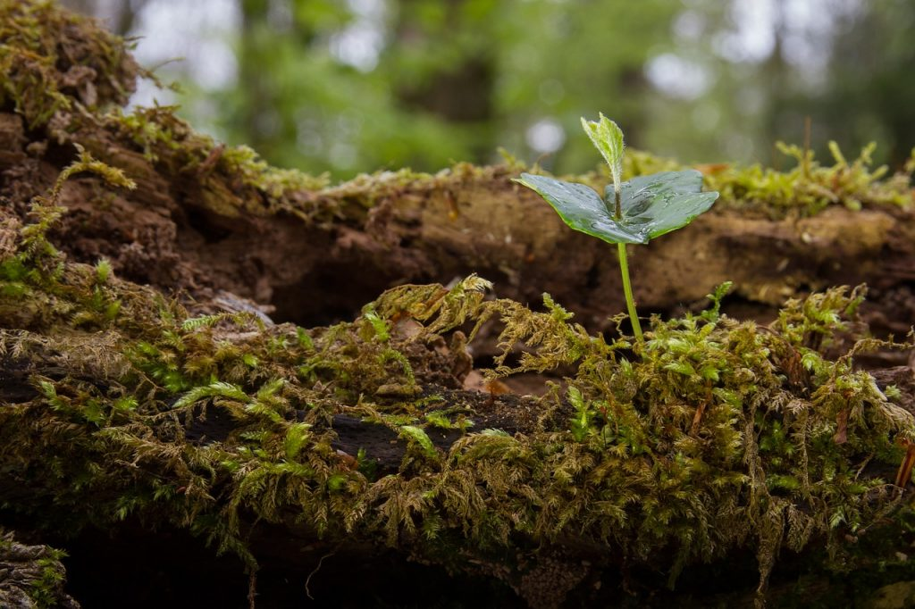 Árbol germinado