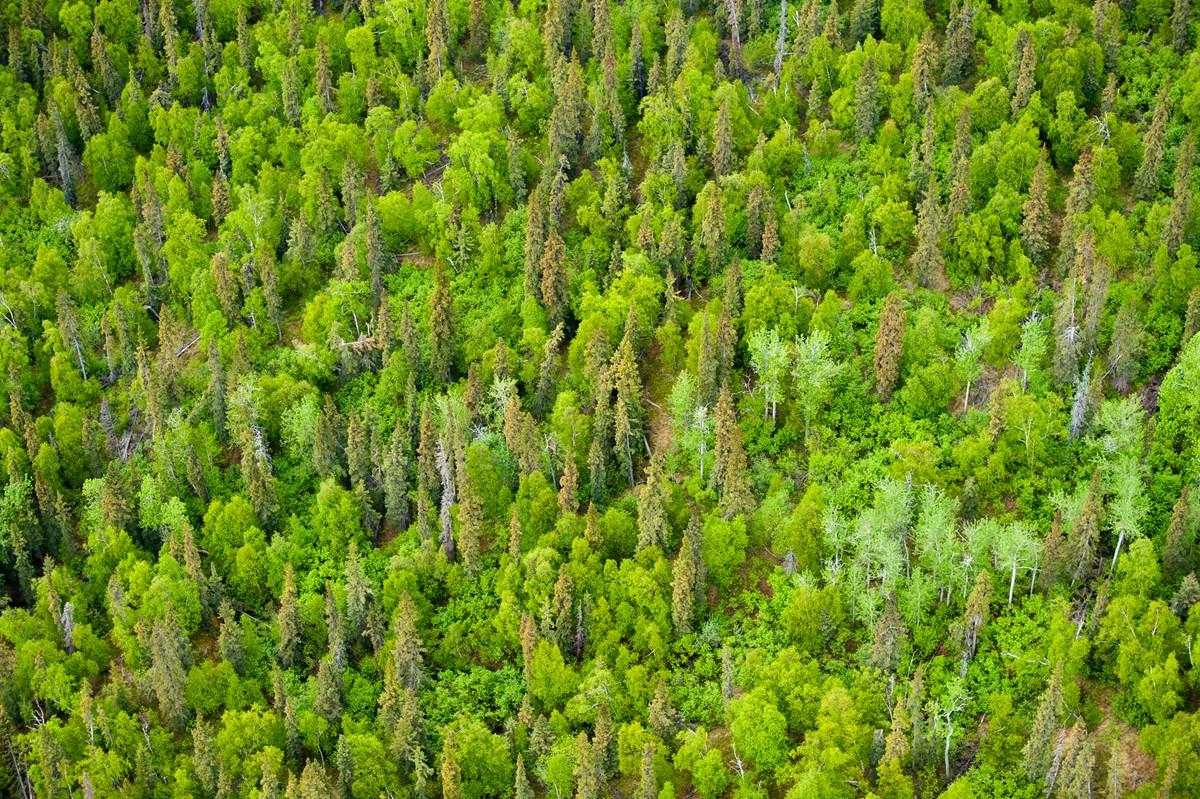 Bosque americano