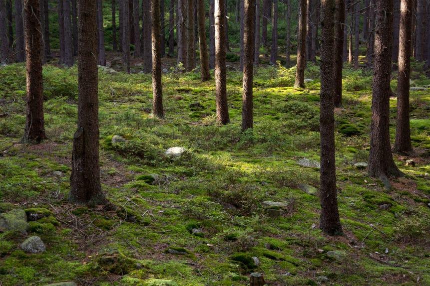 Hay que proteger los bosques