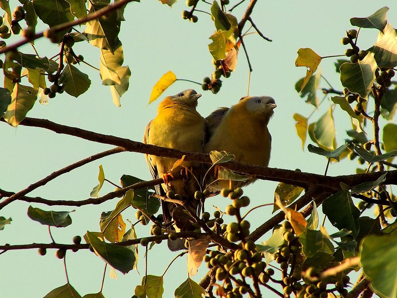 Muchos animales utilizan los árboles como refugio